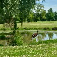 Photo ILE FLEURIE GOLF CLUB 12